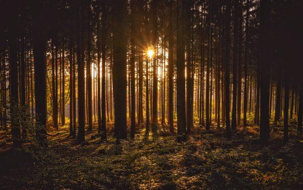 Wald » Stefan Bitzer